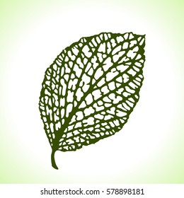 Decorative leaf isolated. Natural detailed macro illustration.