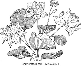 Decorative lotus flowers pattern. Hand drawn vector leaves and flowers. Coloring book for children and adults. Isolated on white background. Dood and Zen, meditation, relaxation. Outline. Line art.