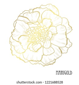 Decorative marigold flower, design element. Can be used for cards, invitations, banners, posters, print design. Golden flowers