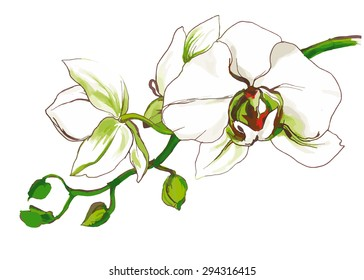 Decorative Orchid flower branch
