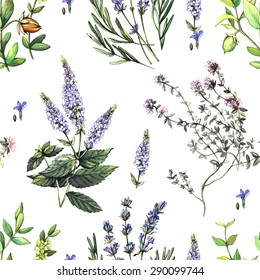 Decorative pattern with medicinal plants.  Hand painting. Watercolor. Seamless pattern for fabric, paper and other printing and web projects.