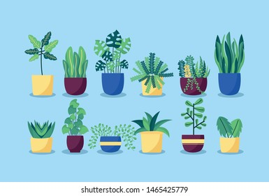 decorative plants in pots leaves interior background vector illustration