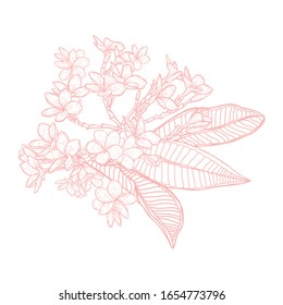 Decorative plumeria flowers, design elements. Can be used for cards, invitations, banners, posters, print design. Floral background in line art style