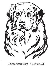 Decorative portrait of dog Australian shepherd, vector isolated illustration in black color on white background