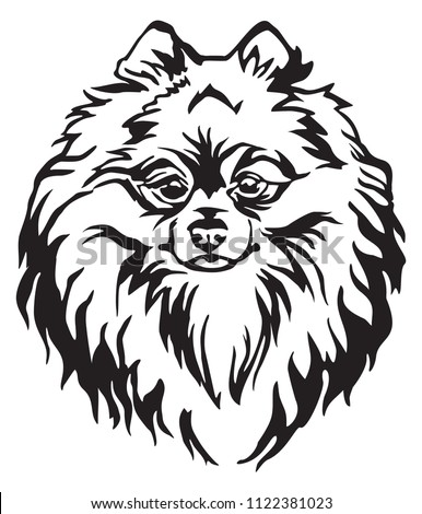 Decorative Portrait Dog Pomeranian Spitz Vector Stock Vector
