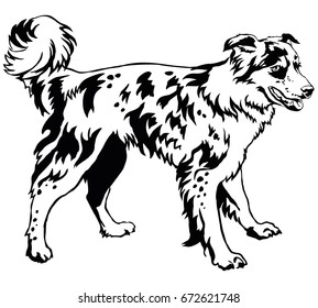 Decorative portrait of standing in profile dog border collie, vector isolated illustration in black color on white background