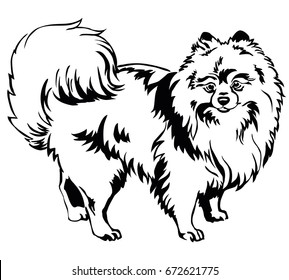 Decorative portrait of standing in profile dog breed Spitz (Pomeranian), vector isolated illustration in black color on white background