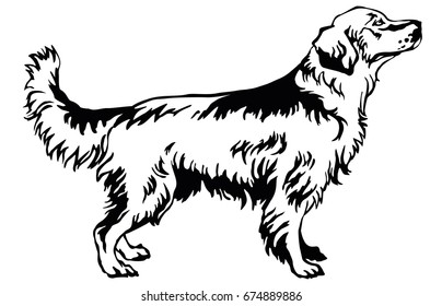 Decorative portrait of standing in profile dog golden retriever, vector isolated illustration in black color on white background
