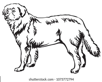 Decorative portrait of standing in profile Maremma Sheepdog, vector isolated illustration in black color on white background