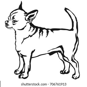 Decorative portrait of standing in profile short haired Chihuahua, vector isolated illustration in black color on white background