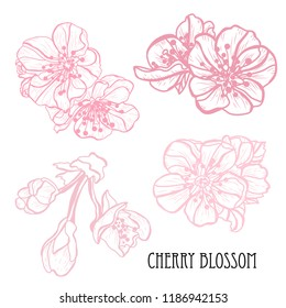 Decorative sakura flowers set, design elements. Can be used for cards, invitations, banners, posters, print design. Floral background in line art style