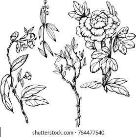 Decorative set in the chinoiserie style with peonies, wooden peony, branch. Ink illustration. Isolated on white. For wedding, scrapbooking, wallpaper and other design. Card design.