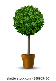 Decorative trimming boxwood tree in flowerpot.
