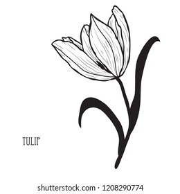 Decorative tulip flower, design element. Can be used for cards, invitations, banners, posters, print design. Floral background in line art style