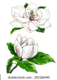 Decorative white magnolia flower in blossom. Hand drawn watercolor tropical flowers isolated on white background. Botanical illustration for wedding printing products, cards, invitation.