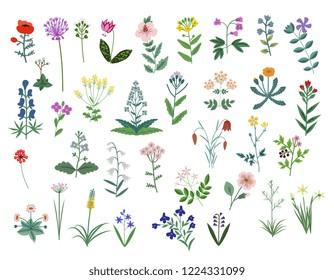 Decorative wild flowers vector set