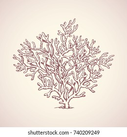 Deep old invertebrate Anthozoa Cnidaria polyp bush isolated on white backdrop. Freehand outline ink hand drawn picture sketchy in art retro scribble style pen on paper. View closeup and space for text