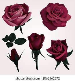 Deep Red Realistic Roses Vector Clip Art set of 6 Marsala Flower image