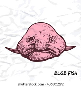 Deep sea fish blobfish sketch outline color vector illustration isolated on white crumpled paper background