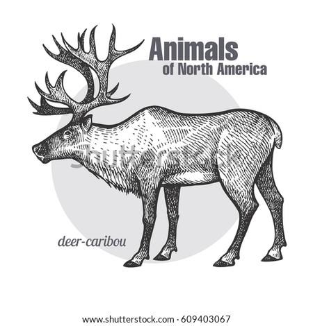 deer caribou hand drawing animals north のベクター画像素材