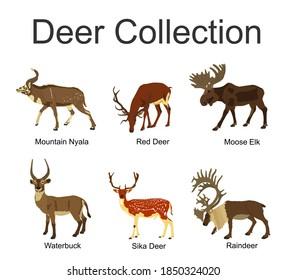 Deer collection vector illustration isolated on white background. Mountain nyala antelope. Moose elk. Reindeer buck. Red deer grassing. Waterbuck african deer. Sika symbol.