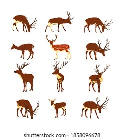 Deer collection vector illustration isolated on white background. Reindeer fawn. Proud Noble Deer male in forest zoo. Powerful buck with huge antlers standing. Animal collection of deer