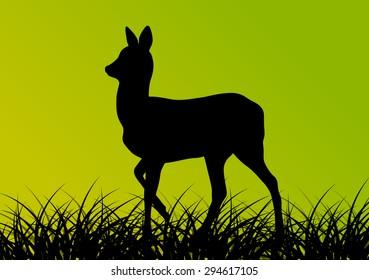 Deer doe in grass field vector background ecology concept
