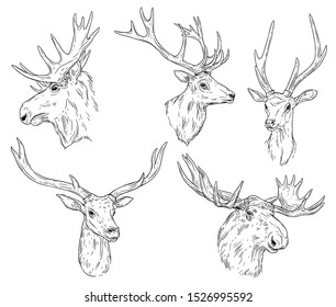 Deer and elk with antlers isolated monochrome sketches. Vector horned animal, wild reindeer head. Hunting sport emblem, wildlife doe or fallow-deer, wapiti beast front side view, t-shirt print