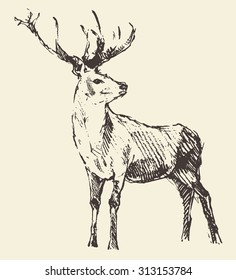 Deer engraving style, vintage illustration, hand drawn, sketch