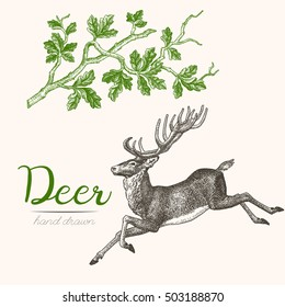Deer engraving style, vintage illustration, hand drawn, sketch. Set 3