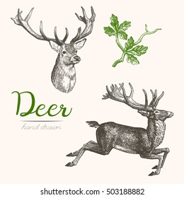 Deer engraving style, vintage illustration, hand drawn, sketch. Set 2