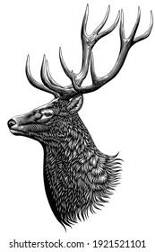 Deer head. Art detailed editable illustration. Vector vintage engraving. Isolated on white background. 8 EPS