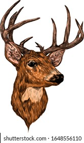 deer head with big horns brown sketch vector illustration print