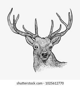 Deer head hand drawn vintage illustration. Black and white drawing