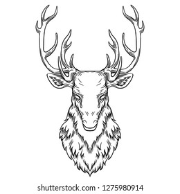 Deer head illustration, drawing, engraving, ink line art vector