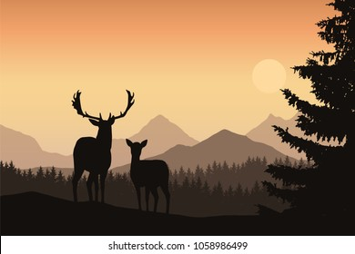 Deer and hind in a mountain landscape with coniferous forest and trees, under the morning sky with the rising sun - vector