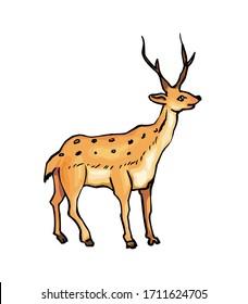 Deer isolated on white background Vector illustration