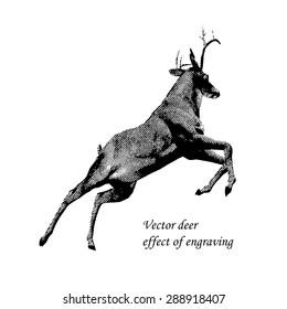 Deer jumps effect of engraving. Vector version