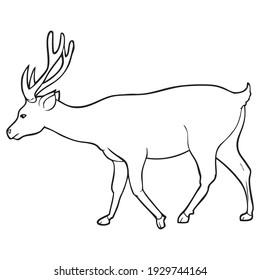 deer line vector illustration, isolated on white background.animals top view