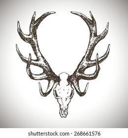 deer scull vector illustration