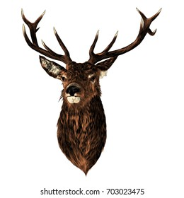 deer sketch vector graphics color head with horns