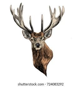 stag deer head sketch vector graphics stock vector royalty free