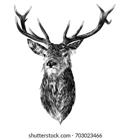 deer sketch vector graphics monochrome head with horns