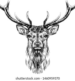 Deer. Sketchy, black and white, hand-drawn portrait of a deer's head on a white background.