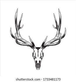 Deer skull illustration, animal vector black & white