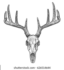 Deer skull illustration, drawing, engraving, ink, line art, vector