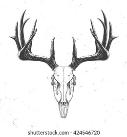 deer skull on white, hand drawn vintage illustration