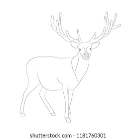 deer stands drawing lines, vector, white background