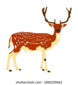 Deer vector illustration isolated on white background. Sika deer, proud Noble Deer male in forest or zoo. Powerful buck with huge neck and antlers standing. Red deer.