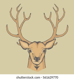 Deer vector illustration. Reindeer head with horn